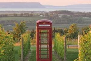 Luckett Vineyards Phone Box Red